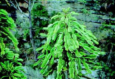 Las 20 plantas más raras del mundo