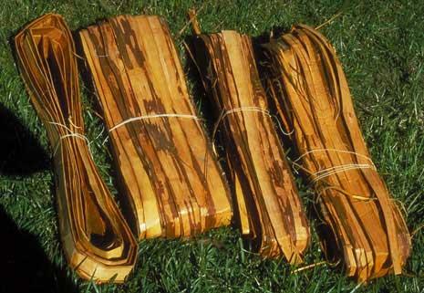 Cedar bark tinder dating