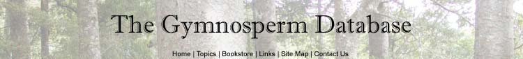 Gymnosperm Database